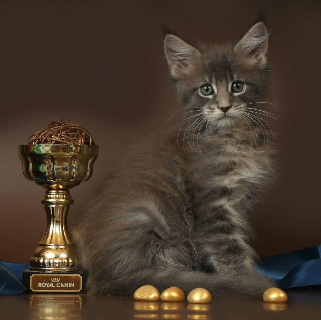 26.10.17 кот голубой мрамор