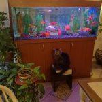 зоогостиница для кошек