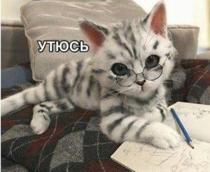 немного кошачья юмора на страничке питомника мейн кунов хрустальная орхидея
