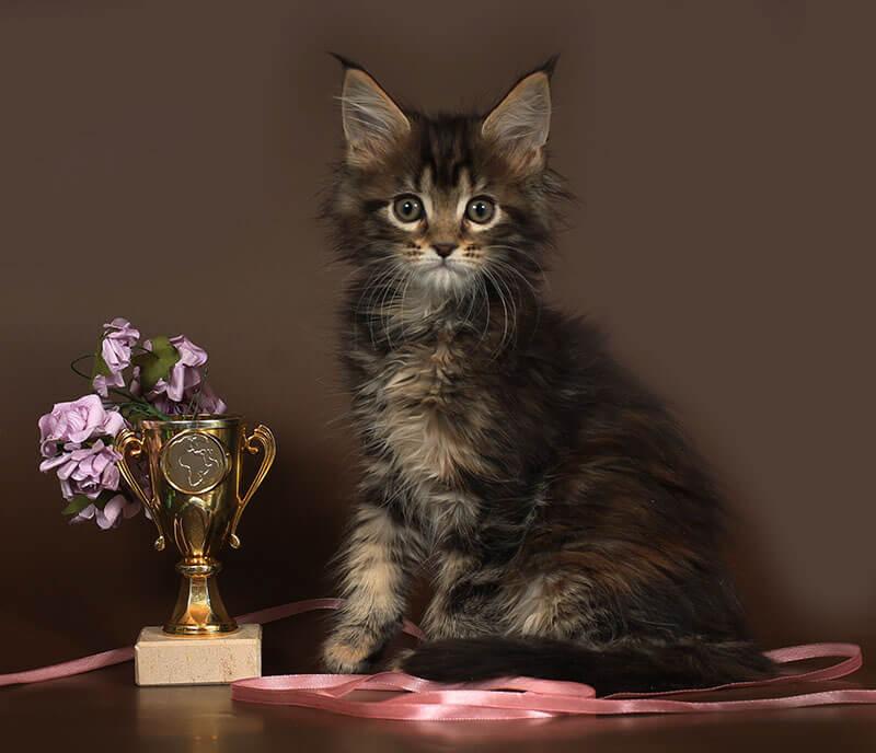 Кошка №59 ПОМЕТ НА БУКВУ Ф от 07.10.18г мейнкун