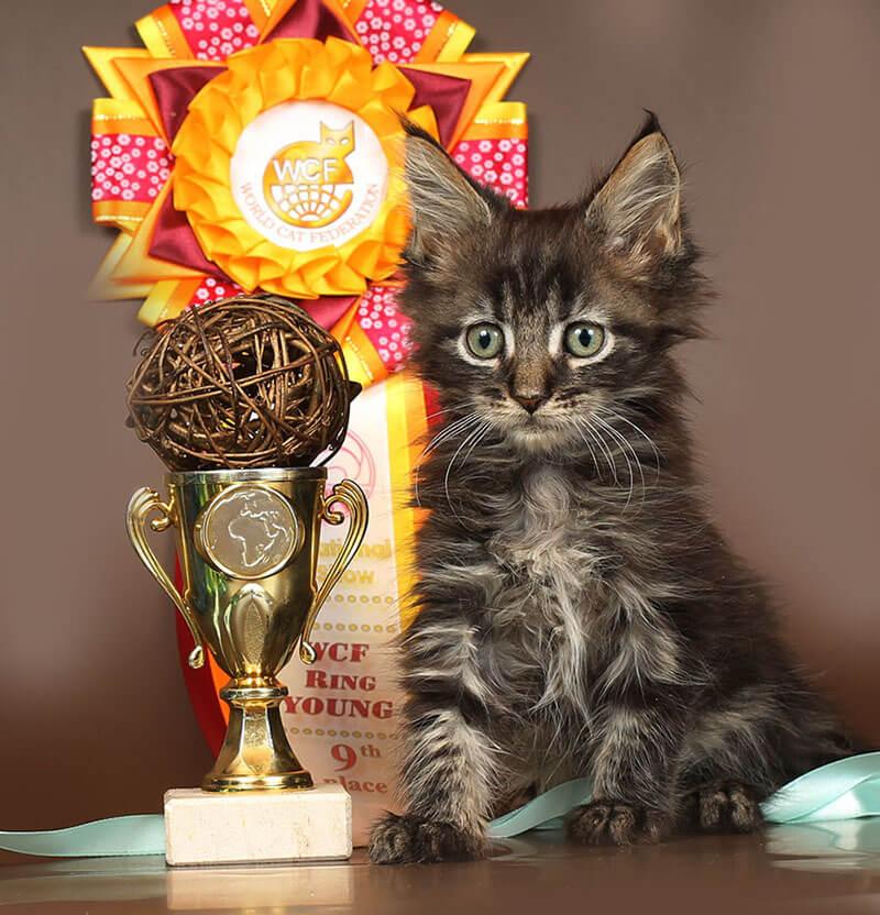 Кот №92 мейн кун ПОМЕТ НА БУКВУ К от 17.12.18г