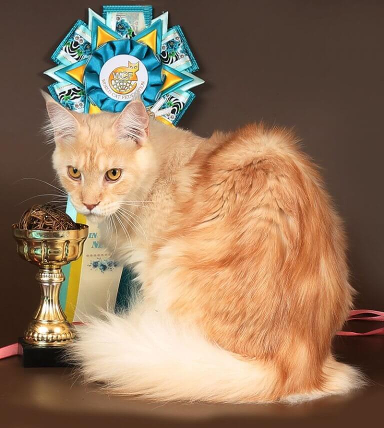 Кошка №68 ПОМЕТ НА БУКВУ Б от 21.02.19г ПОЛИДАКТ 6х6х6х6 2701 мейн-кун