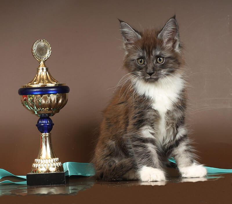 Кот №106 ПОМЕТ НА БУКВУ Г от 27.01.19 мейн-кун