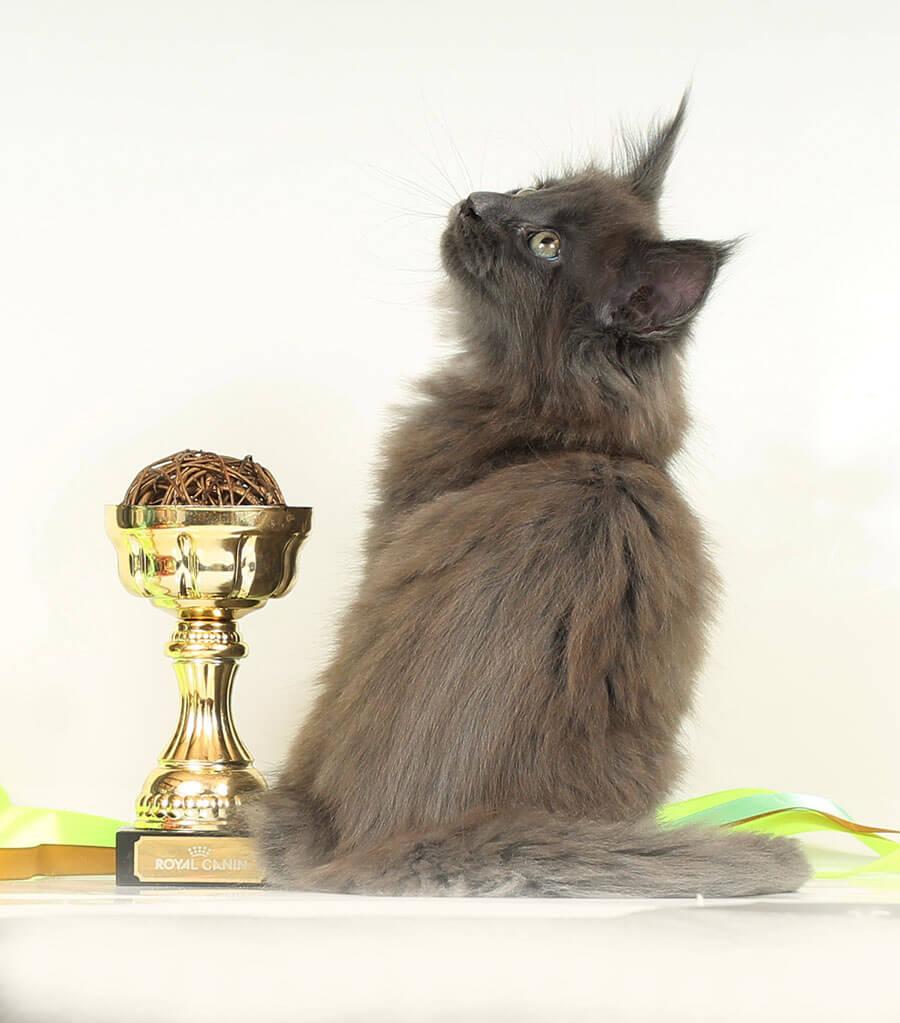 Кот №25.1 ПОМЕТ НА БУКВУ Г от 11.10.19 мейн кун